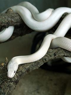 ワニとヘビ