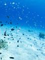 海の楽園フォト018