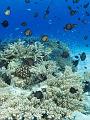 海の楽園フォト020