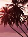 海の楽園フォト065
