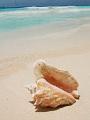 海の楽園フォト077