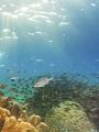 海の楽園フォト102