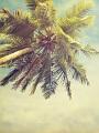 海の楽園フォト161