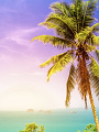 海の楽園フォト190