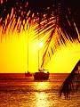 海の楽園フォト240