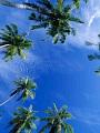 海の楽園フォト242