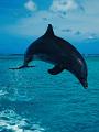海の楽園フォト282