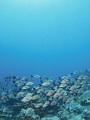 海の楽園フォト306
