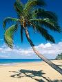 海の楽園フォト317