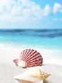海の楽園フォト347