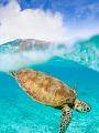 海の楽園フォト349