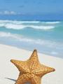 海の楽園フォト361