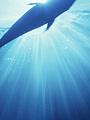 海の楽園フォト008