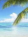 海の楽園フォト093