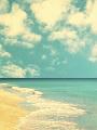 海の楽園フォト101