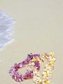 海の楽園フォト115