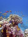 海の楽園フォト140