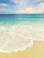 海の楽園フォト158