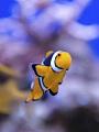 海の楽園フォト176