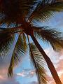 海の楽園フォト209