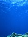 海の楽園フォト211