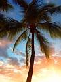 海の楽園フォト214
