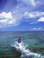 海の楽園フォト226