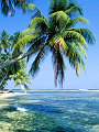 海の楽園フォト243