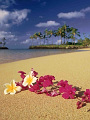 海の楽園フォト251