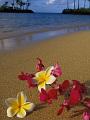 海の楽園フォト257