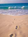 海の楽園フォト284