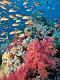 海の楽園フォト310