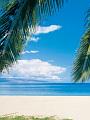 海の楽園フォト313