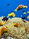 海の楽園フォト339