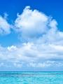 海の楽園フォト342