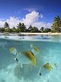 海の楽園フォト363