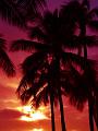 海の楽園フォト364