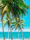海の楽園フォト365
