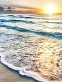 海の楽園フォト372