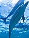海の楽園フォト375