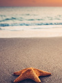 海の楽園フォト378