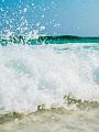 海の楽園フォト441