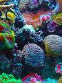 海の楽園フォト459