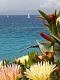 海の楽園フォト475
