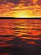 海の楽園フォト518