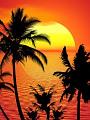 海の楽園フォト524