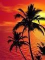 海の楽園フォト525